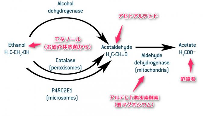 aldehyde dehydrogenase